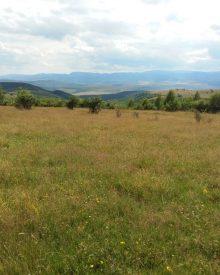 7 trasee de plimbare sau alergare prin Cluj
